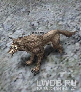 Черный Волк - Black Wolf