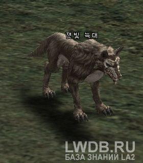 Пепельный Волк - Ashen Wolf