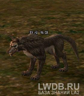 Волк Кхаши - Kasha Wolf