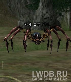 Клыкастый Паук Кхаши - Kasha Fang Spider