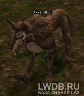 Древесный Волк Кхаши - Kasha Timber Wolf