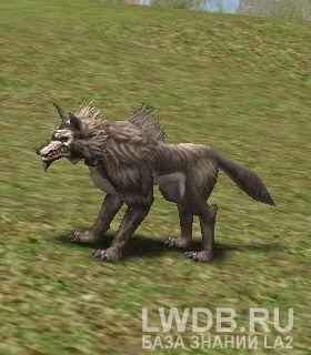 Жуткий Волк Кхаши - Kasha Dire Wolf