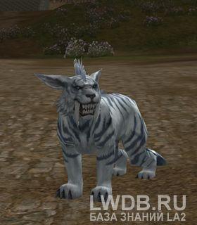 Пантера - Panthera